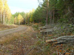 Kantklippning Gullhovägen 2010